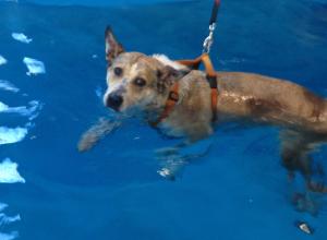 piscina_IMG_1727