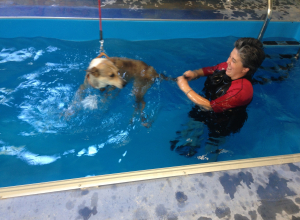 piscina_IMG_1729